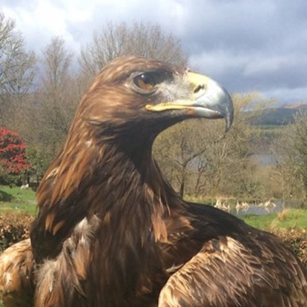 Kintail Birds of Prey