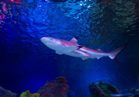 Sea Life Loch Lomond - Family Fun in Argyll