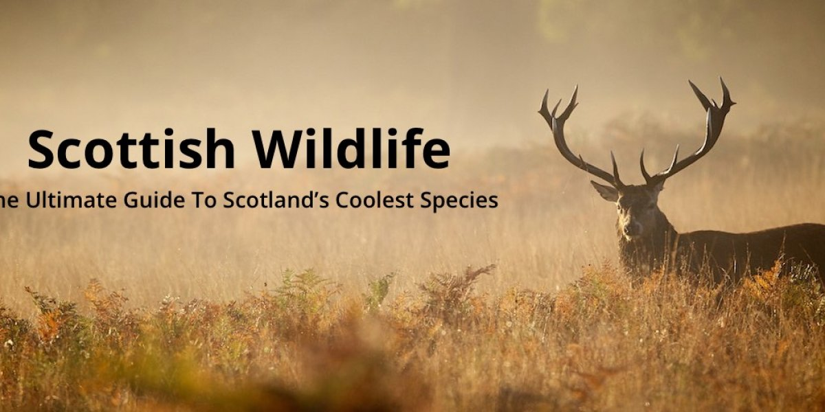 Scottish Wildlife: The Ultimate Guide To Scotland's Coolest Species