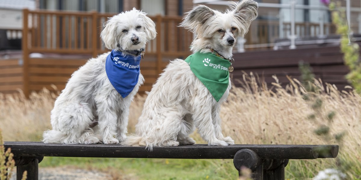 Pet friendly breaks at Loch Lomond Holiday Park