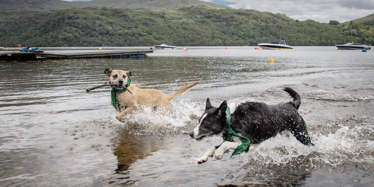 Pet Friendly Holidays dogs running