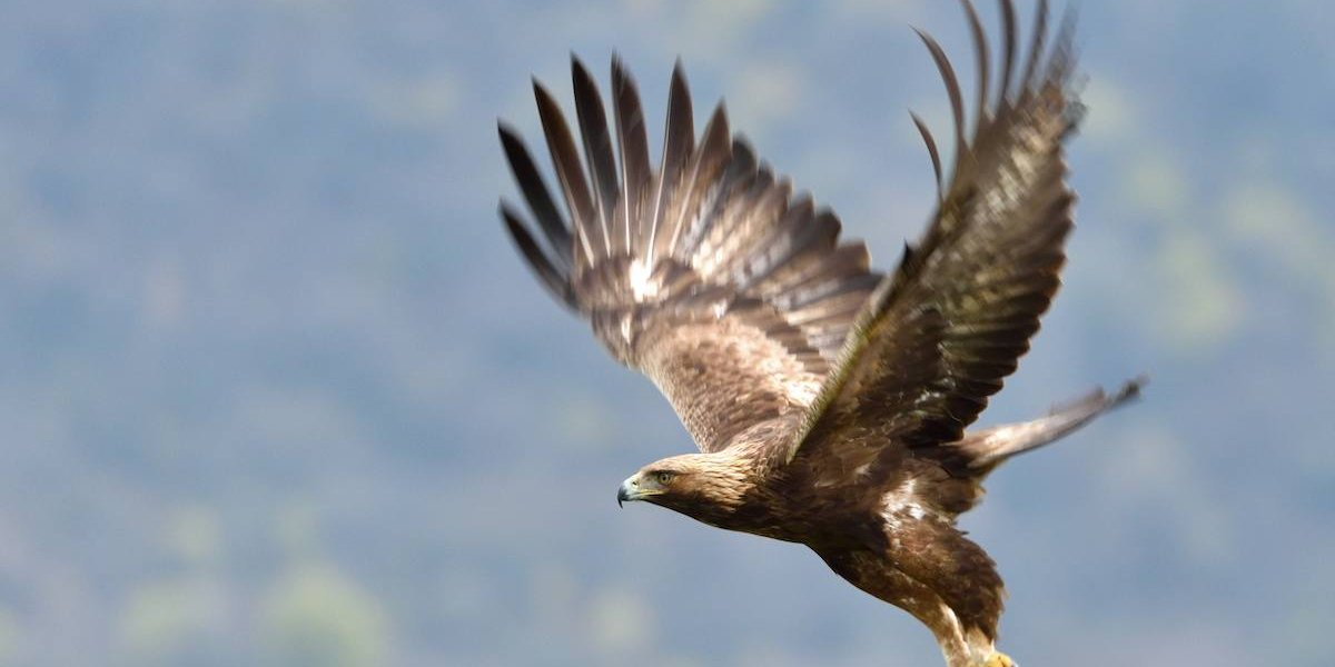 Scottish Wildlife: The Ultimate Guide To Scotland's Native Species
