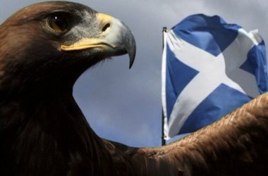 Bird of Prey Centre - Family Fun in Argyll