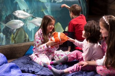 Sleep Over at the Sea Life Centre