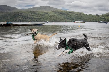 Argyll Holidays to fund sensory garden for Scottish SPCA dogs