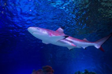 Visit Loch Lomond Sea Life