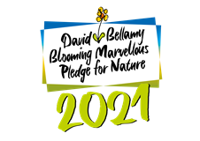 David Bellamy award